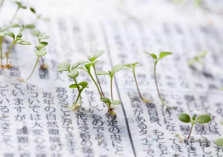 Japonya'da toprağa gömüldüğünde bitkiye dönüşen gazete